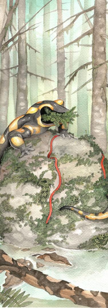 Faceless Fire Salamander