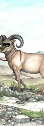 Faceless Goat