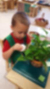plant polishing.jpg