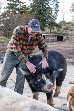 Boris the Boar enjoying a scratch