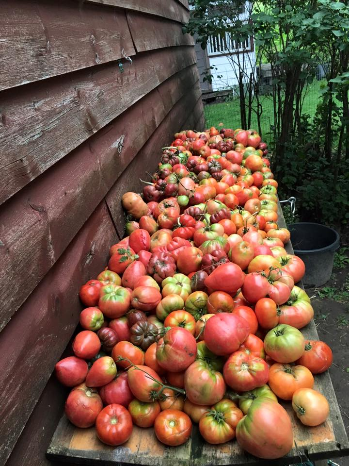 Heirloom harvest 2016