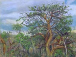 Laʻau Wiliwili, 16x12, $400