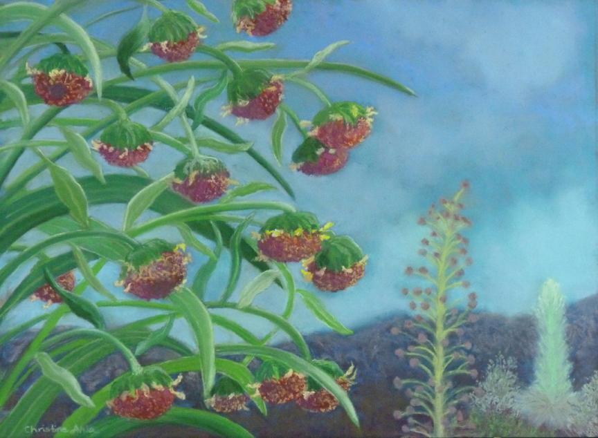ʻĀhinahina o Mauna Loa,16x12, $400