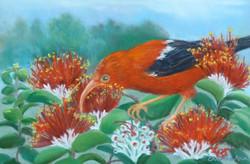 'I'iwi and Lehua, 10x7.5, sold