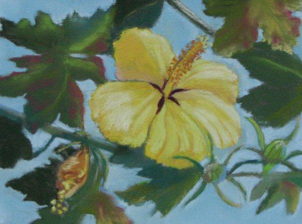 Maʻo Hau Hele, 9x6, $95