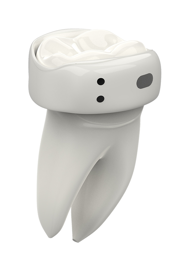 tooth_exploded_white.png
