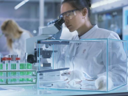 Rola lekarza weterynarii w opiece nad zwierzętami laboratoryjnymi