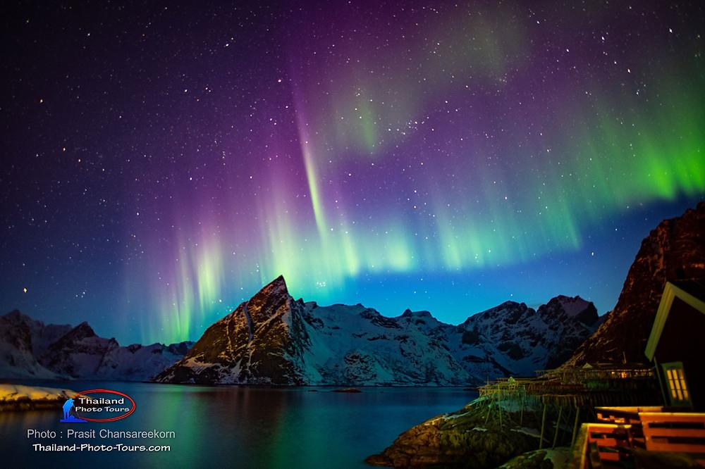 Lofoten Northern Light