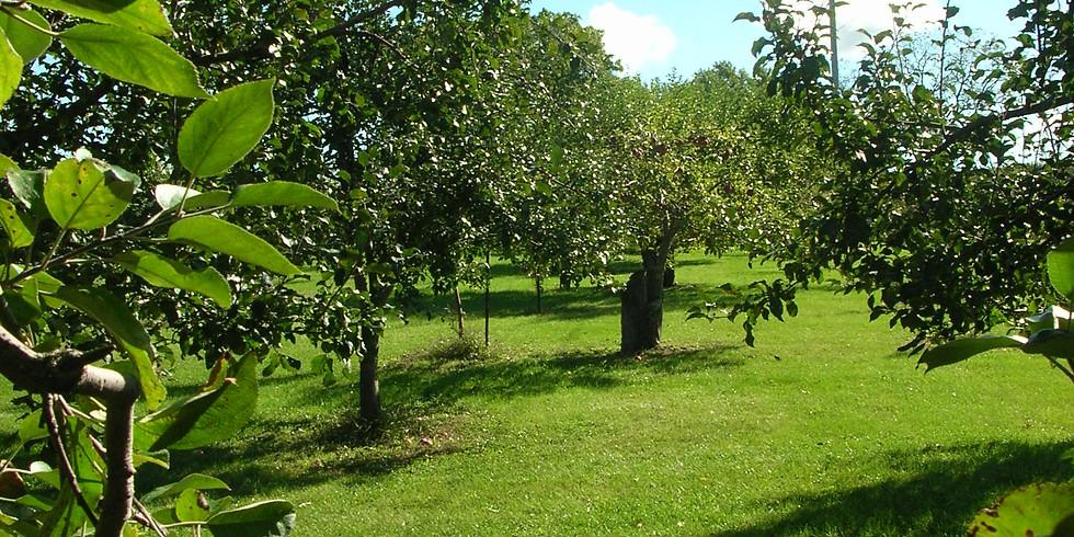 Apple Orchard - Reiki Meditation