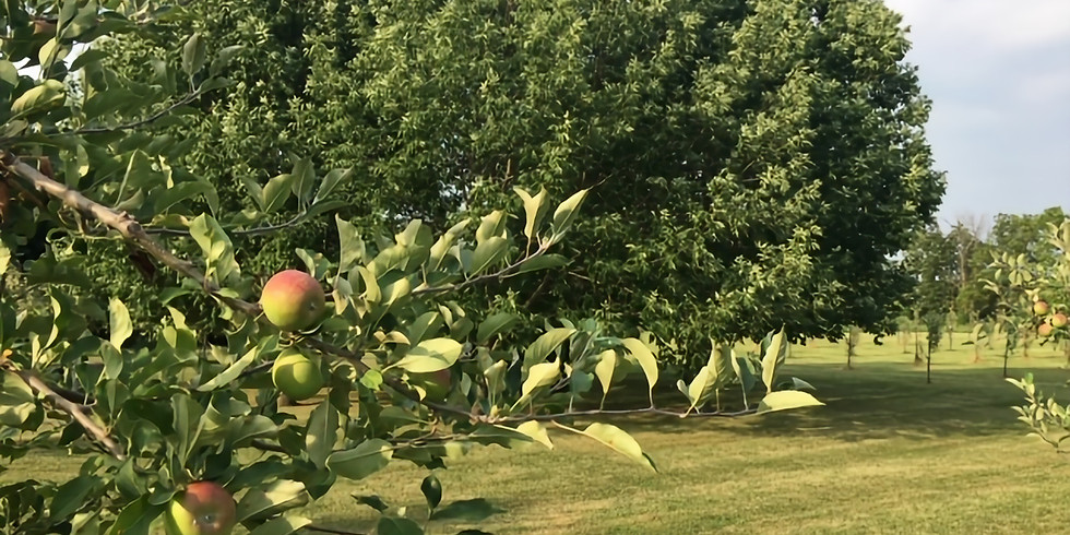 Reiki in an Apple Orchard