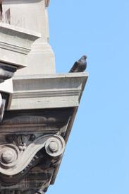 Pigeon sitting on a ledge, NYC.
