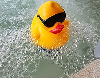 duck in water_edited.jpg