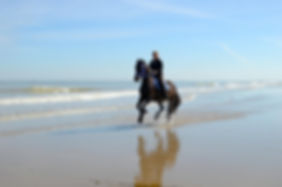Horse Riding  The equestrian centers of the region offer the opportunity to make beautiful walk on the beach but also in the dunes and countryside.
