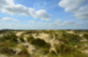 Flemish Nature reserve Westhoek The Flemish Westhoek Nature Reserve (345 ha) is the only area of dunes in the Flemish coast where almost the entire dune vegetation is represented in the same dune landscape.