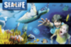 Sea Life  At 50 minutes by car discover the animals of SEA LIFE Blankenberge.  You will make an exciting trip on the Amazon River and drive through the seas and oceans.