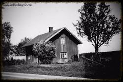 Slitubråten mai 1949