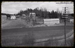 """""""Nesse""""hønseri ved Susebakke 1950"""