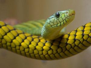 snake-3237_640.jpg