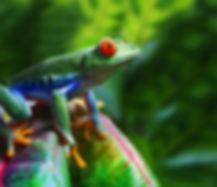 web-costa-rica-frog-nature-green-shutter