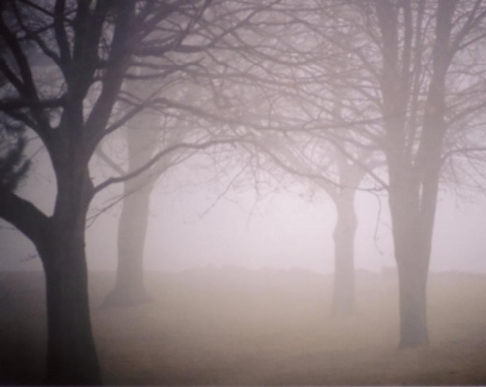 fog-1311935.jpg