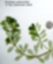 ACE- EWM plant_edited.jpg