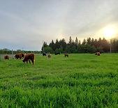 ParKelm Farm_edited.jpg