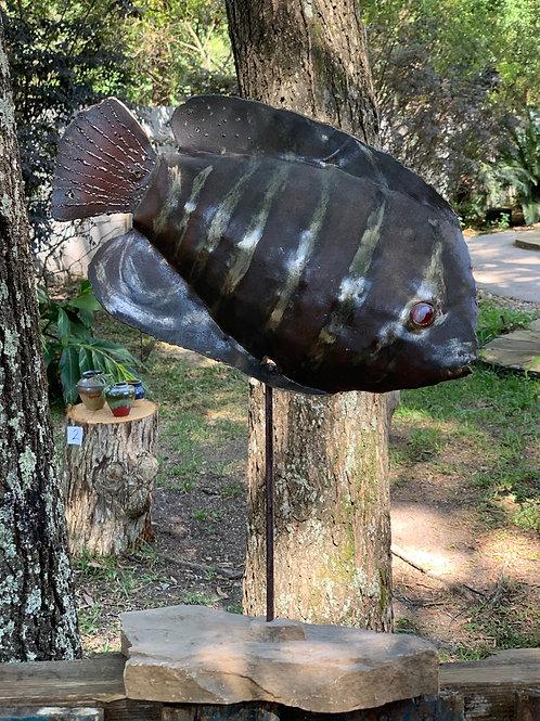FISH, Angel 2