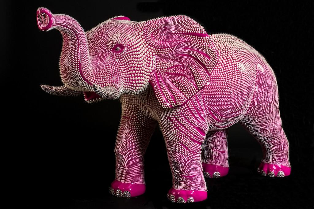 Elephant Rose 1