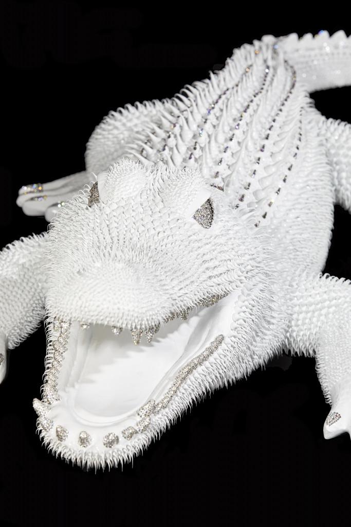 Crocodile Blanc 2