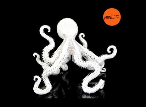 Le poulpe blanc d'Eddy Maniez - Eddy Maniez's white octopus
