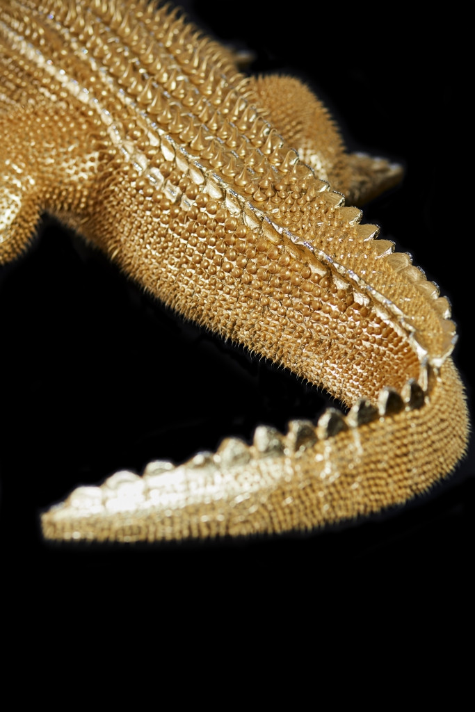 Crocodile Or 3