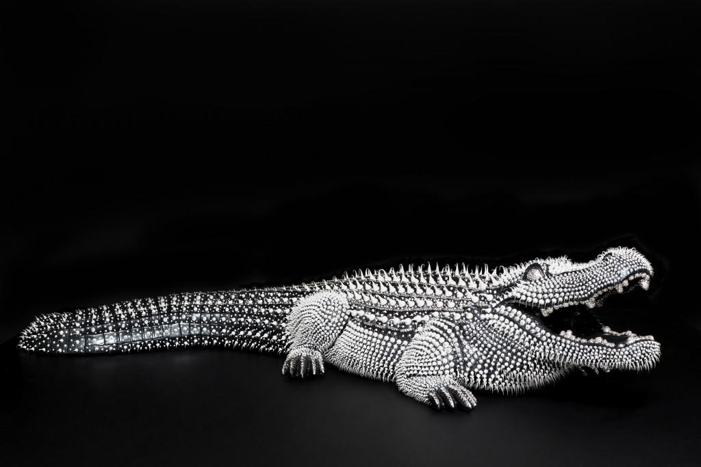 Crocodile Noir 1