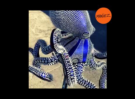 Le poulpe bleu caméléon d'Eddy Maniez - Eddy Maniez's chameleon blue octopus