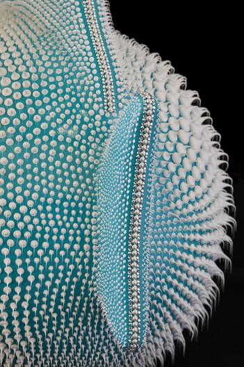 Turquoise blue moon fish