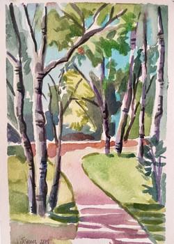 Birch Trees Along Road