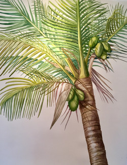 Tanta, Palm Sunday III