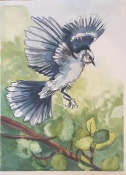 Blue Bird II