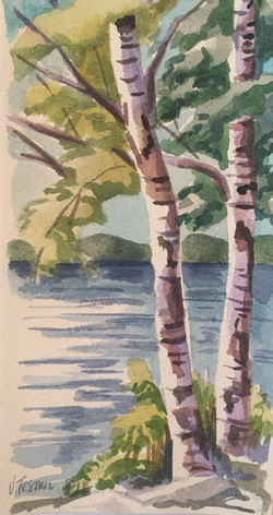 Fish Creek:  Birch Trees