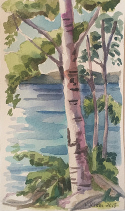 Spring Birch Trees, Fish Creek