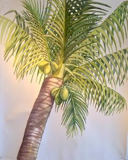 Tanta, Palm Sunday