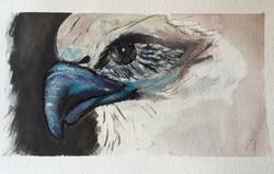 Ria's Eagle