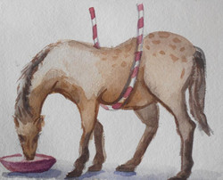 Circus Horse Drinking Water