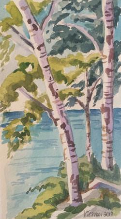 Study of Birch Trees in Spring