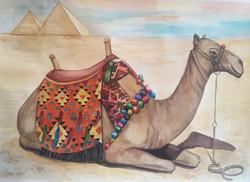 Crimson at Giza