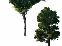 TREE 3つセット 切り抜き素材。