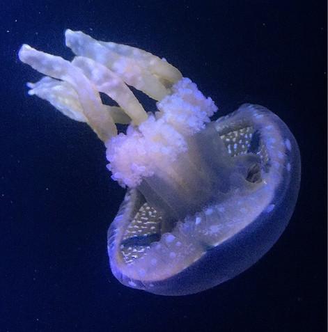 Aquarium Gel