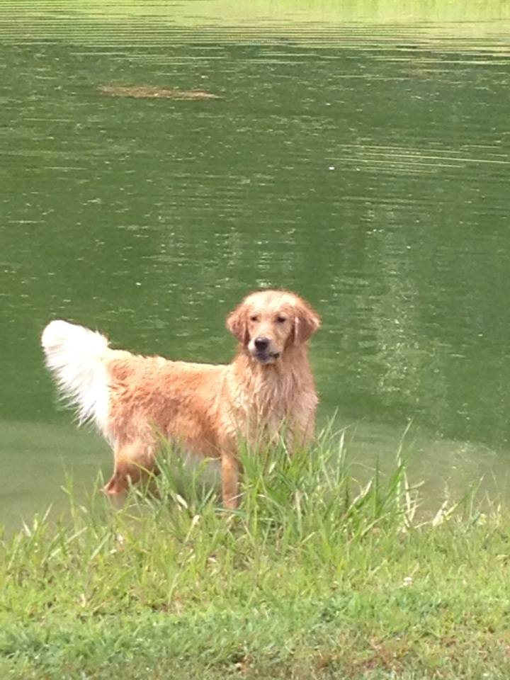 Diva at Pond