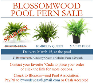 Blossomwood Pool Spring Fern Sale Update!