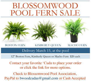 Blossomwood Pool Spring Fern Sale!