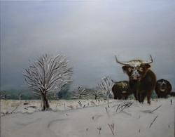 Highlanders écossais dans la neige